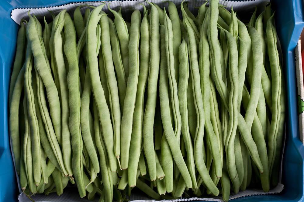 Gardening Tip From Frances - Beans