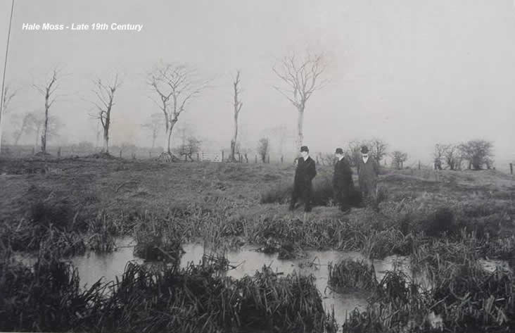 Hale Moss 19th Century